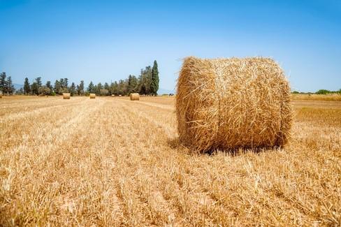 Attività extra-agricole, la Regione stanzia altri 20 milioni