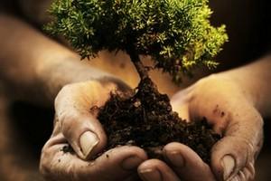 Arbusti piantati per la festa dell'albero