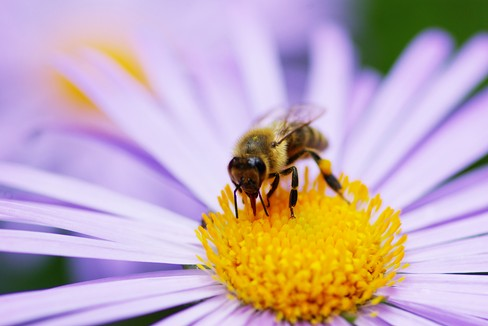 Un Parco per api e farfalle