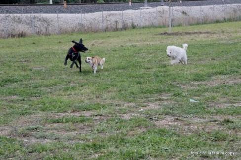 Area per sgambettamento cani