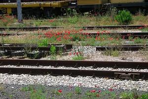 Trasporti, incontro a Roma per la tratta ferroviaria Gravina-Matera