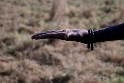 No al Caporalato: Il ballerino freestyle Samuel balla sui campi di Lenticchia