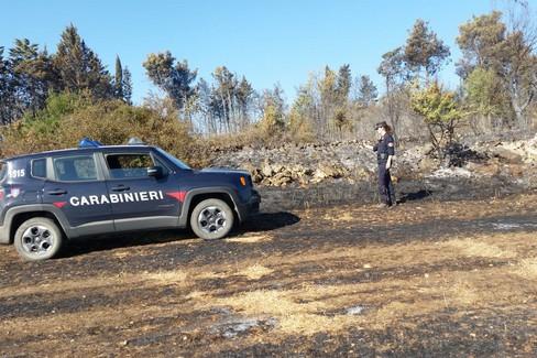 Devastante incendio nel Parco dell'Alta Murgia, denunciato un agricoltore