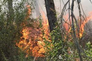 Prevenzione incendi, il Parco si affida agli agricoltori