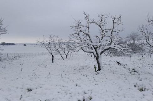 Murgia: neve ad aprile, danni all'agricoltura