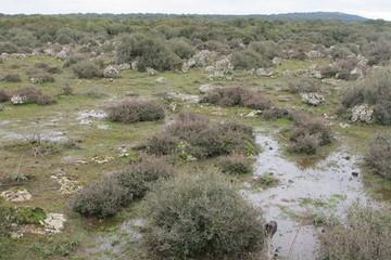 stagni temporanei nel Parco Nazionale dell' Alta Murgia